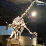 恐竜博(国立科学博物館) 夏休み土日の混雑状況とランチ対策