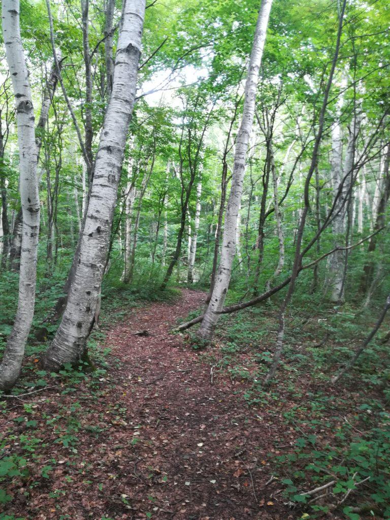 4Km trail コース